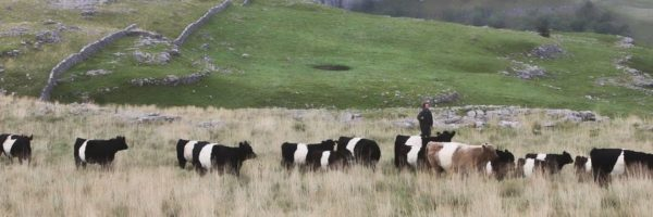 Event outcomes – Farming in Protected Landscapes: opportunities for farmers and land managers in the North of England